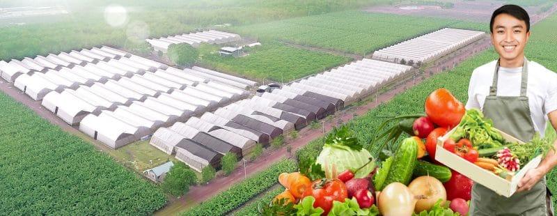 màng pe nhà kính nông nghiệp SBO