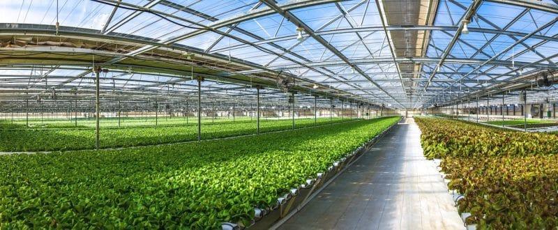 màng nhà kính nông nghiệp trồng rau