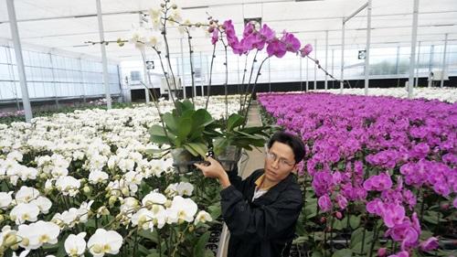 nhà kính trồng lan