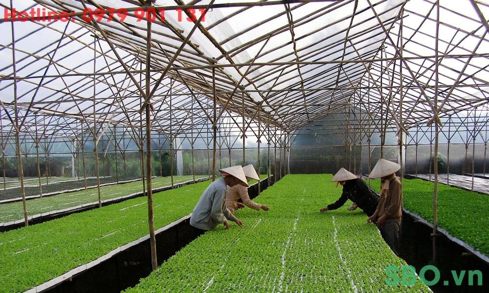 sản xuất trồng rau công nghệ cao