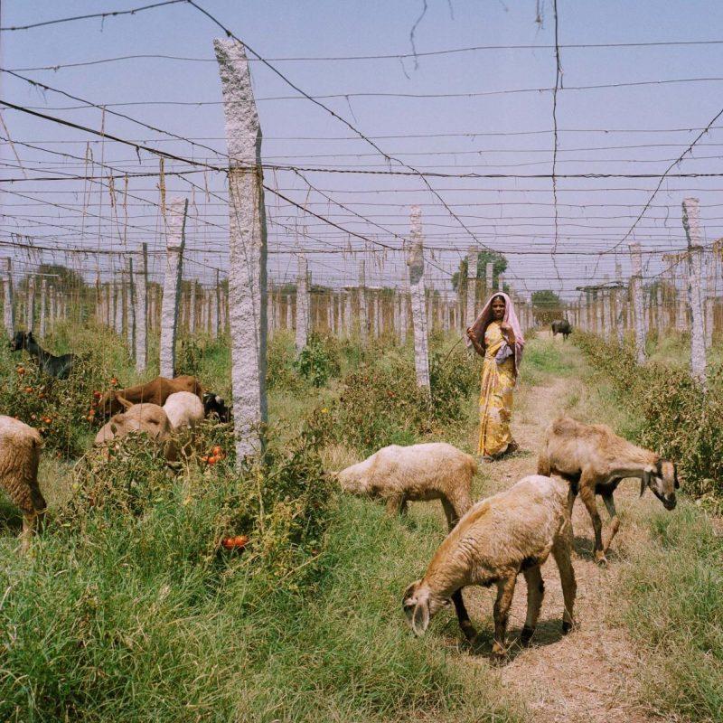 Làm nhà kính trồng rau công nghệ cao: người nông dân thu hoạch lớn ảnh 2