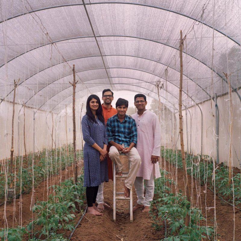 Làm nhà kính trồng rau công nghệ cao: người nông dân thu hoạch lớn ảnh 4