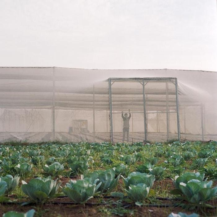 Làm nhà kính trồng rau công nghệ cao: người nông dân thu hoạch lớn ảnh 5