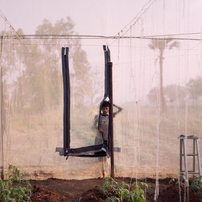 Làm nhà kính trồng rau công nghệ cao: người nông dân thu hoạch lớn ảnh 6