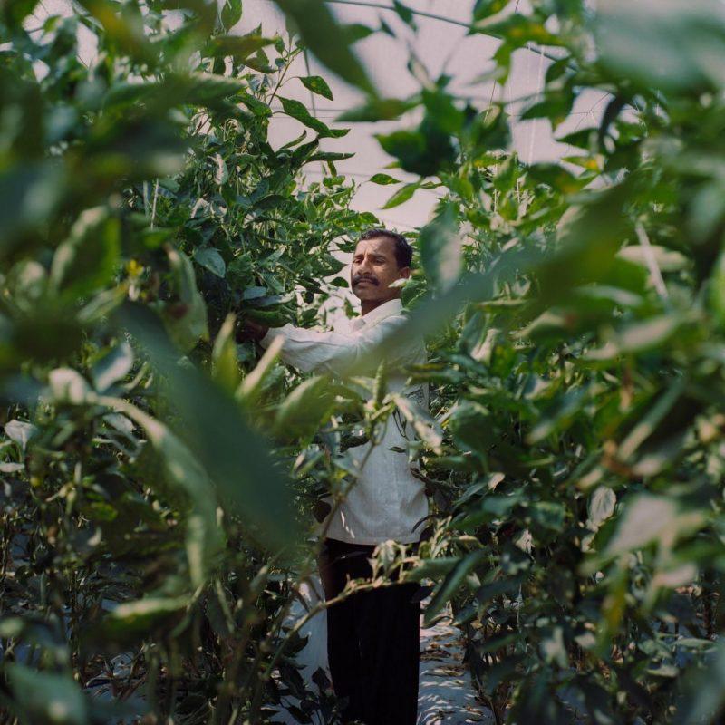 Làm nhà kính trồng rau công nghệ cao: người nông dân thu hoạch lớn ảnh 7