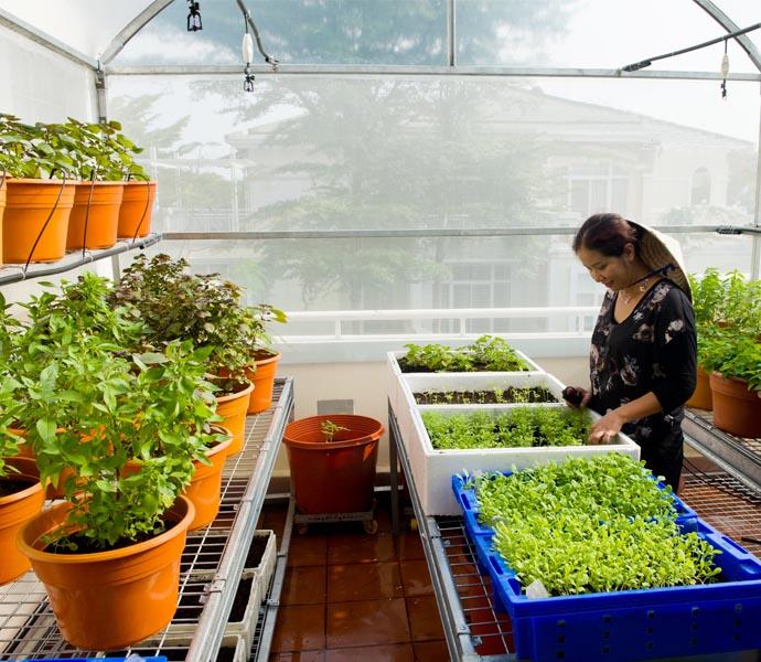 Mô hình nhà kính trồng rau mini gia đình