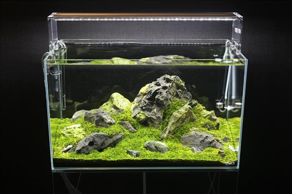 cónên làm bể cá bằng tấm nhựa mica không
