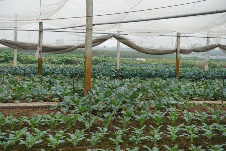 cấu trúc khung đỡ của nhà lưới nông nghiệp