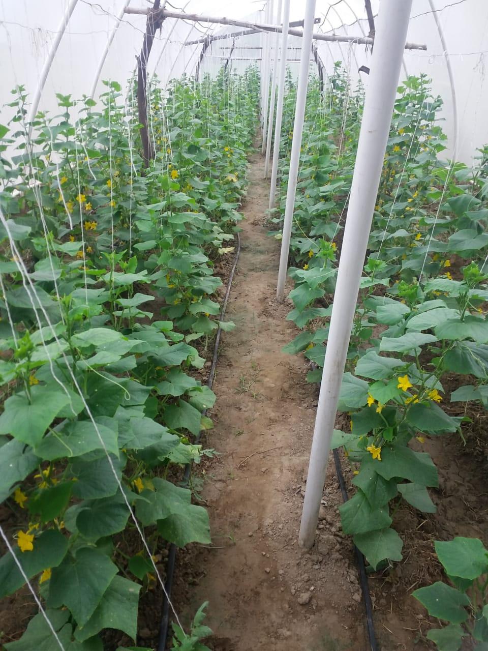 sự khác nhau giữa nhà kính và nhà lưới trong việc bảo vệ cây trồng