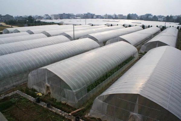 Sự khác nhau giữa nhà lưới và nhà kính trong nông nghiệp