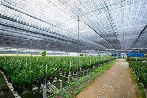 3 Mẫu lưới lợp che dàn lan đạt hiệu quả cao cho cây hoa lan