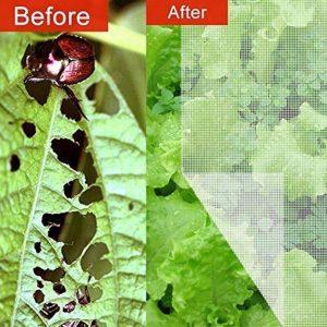 Hiệu quả nông nghiệp khi dùng lưới ngăn côn trùng